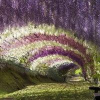 Lilaakác alagút Japánban