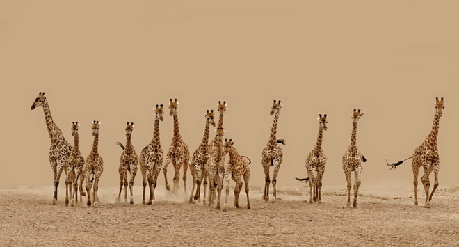 frederick-van-heerden-south-africa-shortlist-nature-wildlife-open-competition-2013_press.jpg