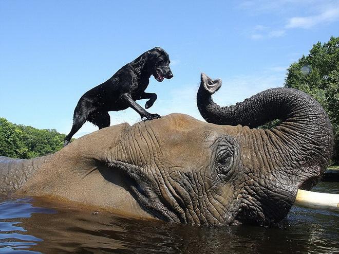 kutya-es-elefant-01.jpg