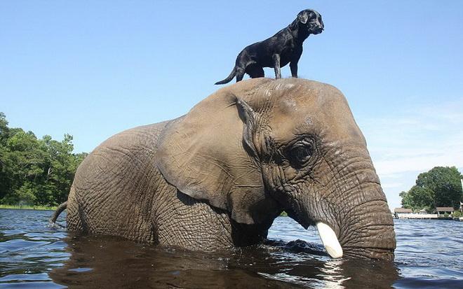 kutya-es-elefant-02.jpg