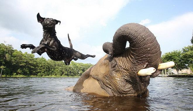 kutya-es-elefant-04.jpg