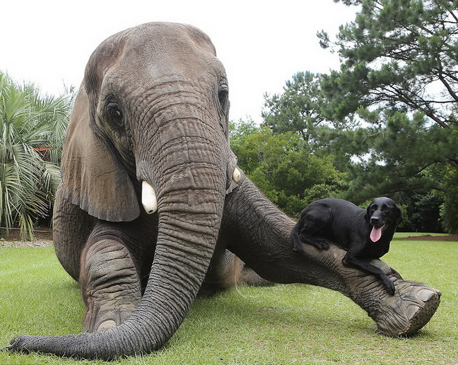 kutya-es-elefant-06.jpg