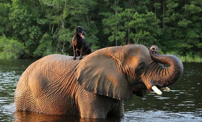 kutya-es-elefant-07.jpg