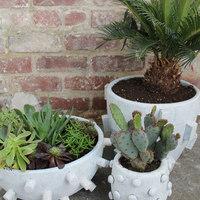 Kaktusz cserepek