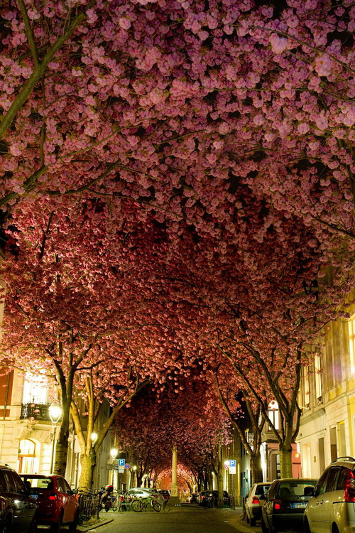 amazing-tree-tunnels-1.jpg