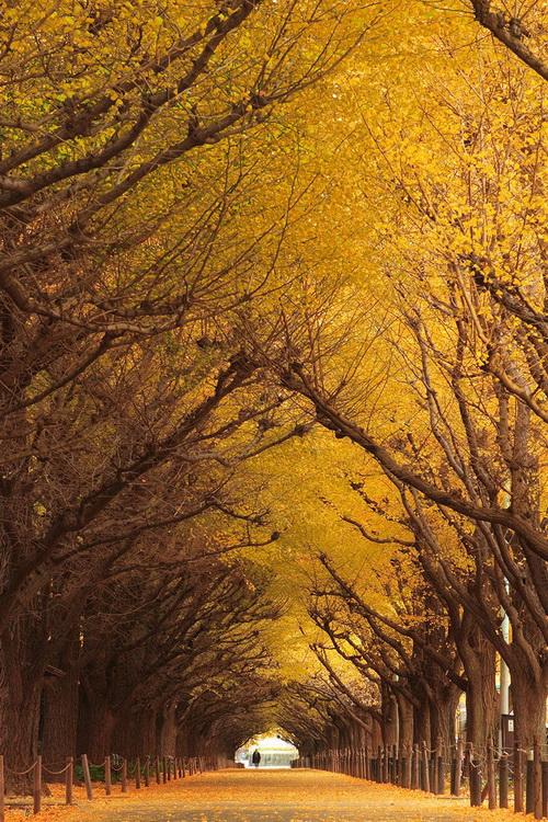 amazing-tree-tunnels-10.jpg