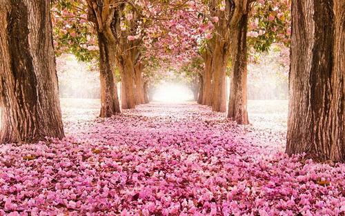 amazing-tree-tunnels-11.jpg
