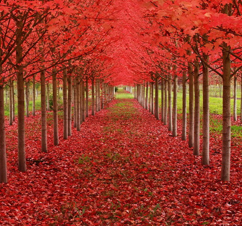 amazing-tree-tunnels-13.jpg