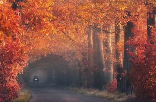 amazing-tree-tunnels-14.jpg