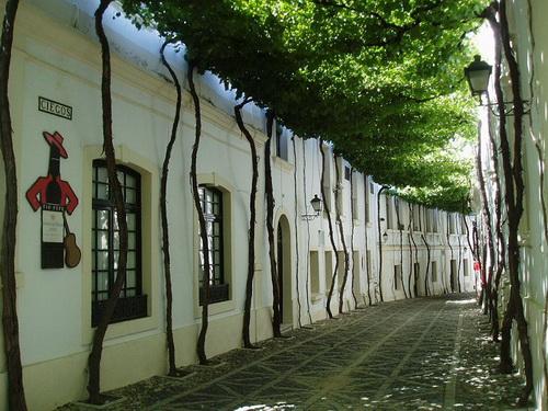 amazing-tree-tunnels-15.jpg