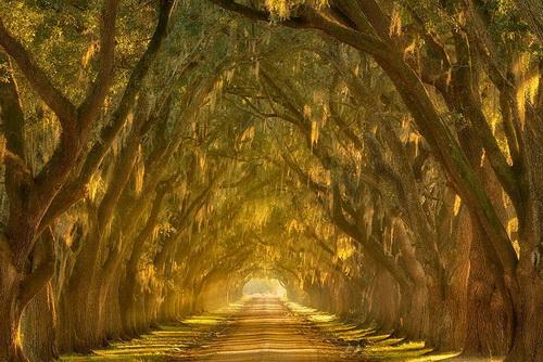 amazing-tree-tunnels-18.jpg