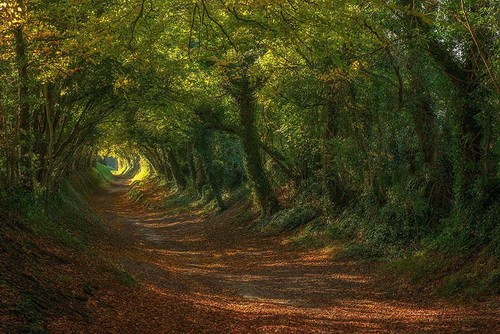 amazing-tree-tunnels-19.jpg