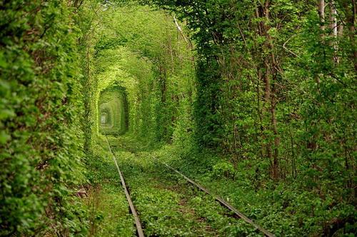 amazing-tree-tunnels-2-1.jpg
