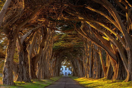 amazing-tree-tunnels-20.jpg