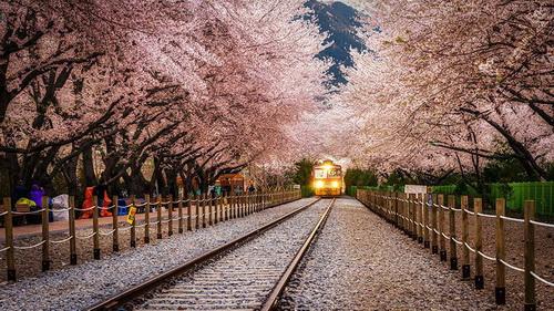 amazing-tree-tunnels-21.jpg