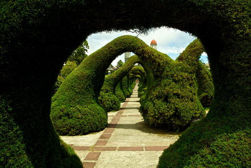 amazing-tree-tunnels-23.jpg