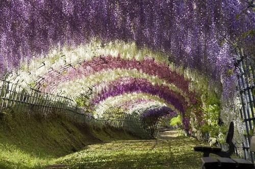 amazing-tree-tunnels-3-1.jpg