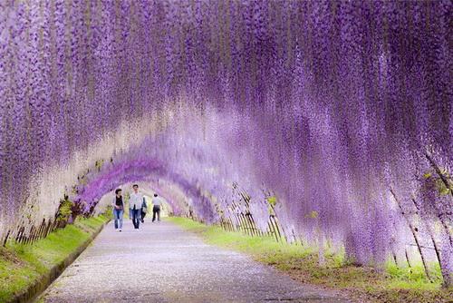 amazing-tree-tunnels-3-2.jpg