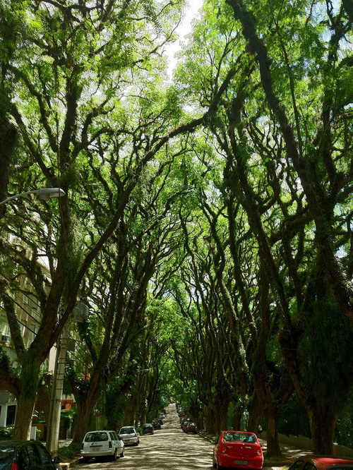 amazing-tree-tunnels-4-1.jpg