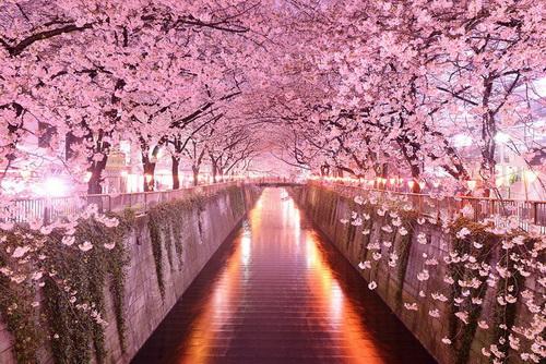 amazing-tree-tunnels-5.jpg