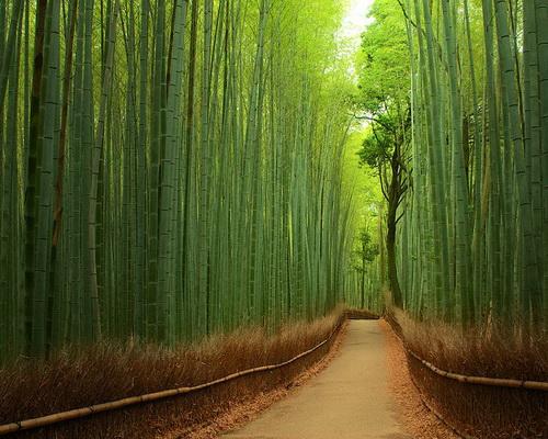 amazing-tree-tunnels-6.jpg