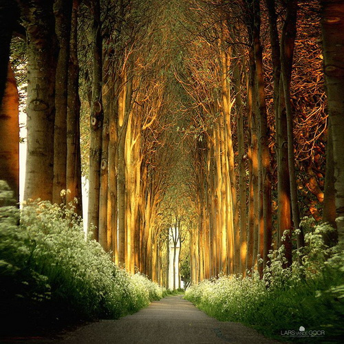 amazing-tree-tunnels-7.jpg