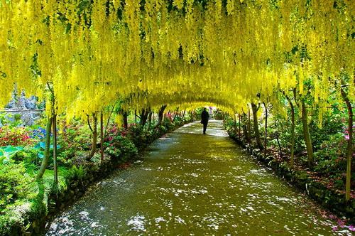 amazing-tree-tunnels-8.jpg