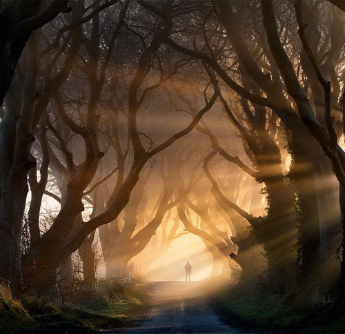 amazing-tree-tunnels-9-1.jpg