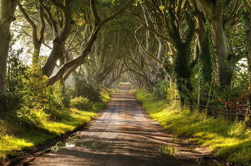 amazing-tree-tunnels-9-2.jpg