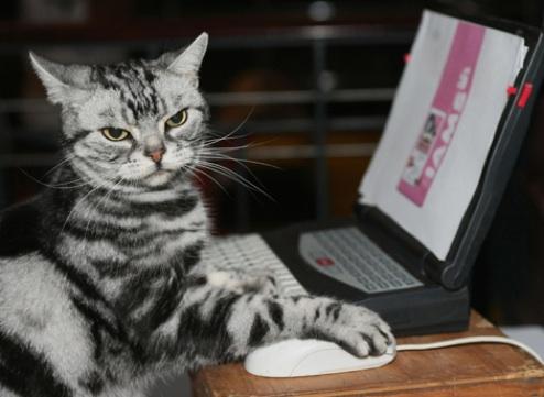 Macskás cicája... :-)