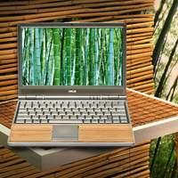 A bambusz titka...