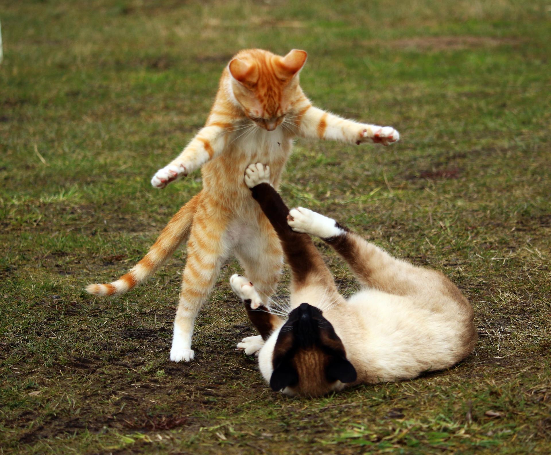 cat-1234950_1920.jpg