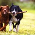 Az állatok gyógyító hatása az emberekre