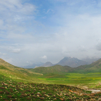 Yellow field in Lar valley/North of Iran, Damavand area