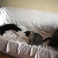 Híres macskabarátok és macskagyűlölők