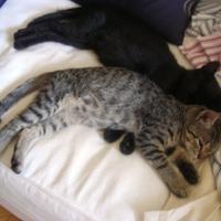 Chloé és Arthur (3.)