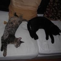 Chloé és Arthur (5.)