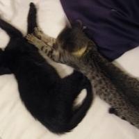 Chloé és Arthur (1.)