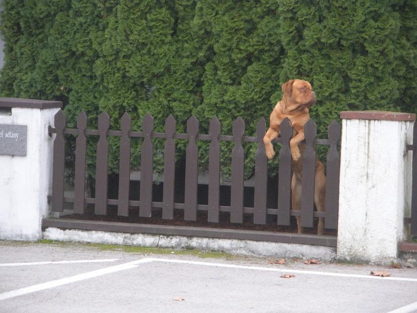 kutya2.jpg
