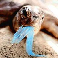 Műanyag zacskók nélkül az élet - be szép is volna!