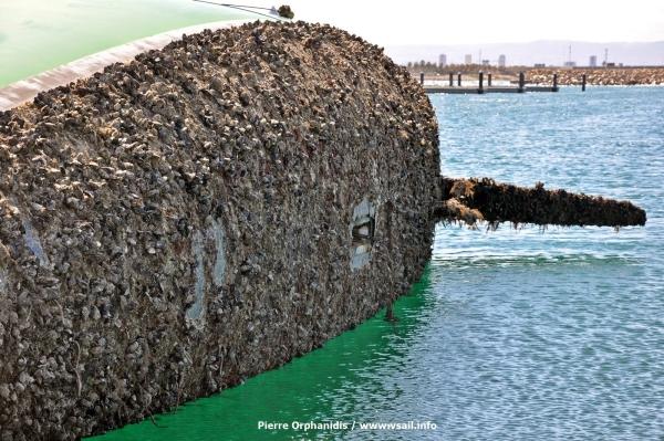 Desafio_mussels_201406_04.JPG