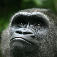 Valaki kikapcsolta a majmokat