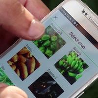 Egy izraeli startup okostelefon applikációja felismeri a növények betegségét