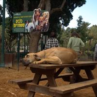 Digi-Dog: Tel-Aviv okos szolgáltatása gazdiknak