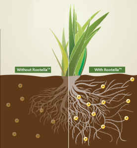mycorrhiza_groundwork.png