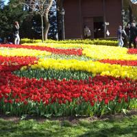 Tavaszköszöntő tulipán fesztivál Isztambulban!