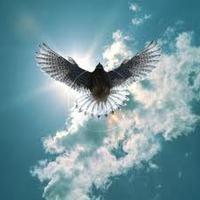 Szent Madarunk a Sólyom már az Égen mutatja az utat !