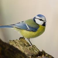 Segítség az állatoknak, madaraknak