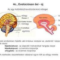 A limbikus rendszer feltöltésének folyamata