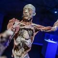 BODY – a legátfogóbb anatómiai enciklopédia